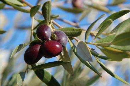 olives-1318257